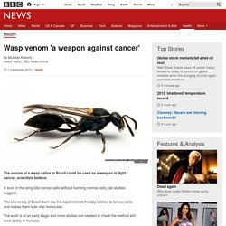 Wasp venom 'a weapon against cancer'