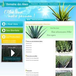 Vente Aloe Vera Linné, arborescens Miller, agens