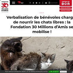 Verbalisation de bénévoles chargés de nourrir les chats libres: la Fondation 30Millions d'Amis se mobilise!