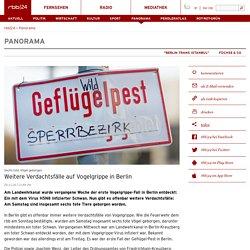 RBB ONLINE 19/11/16 Offenbar zweiter toter Schwan in Berlin gefunden
