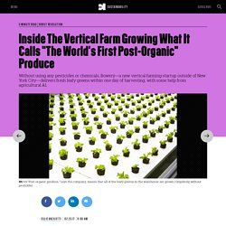 "Inside The Vertical Farm Growing What It Calls ""The World's First Post-Organic"" Produce"