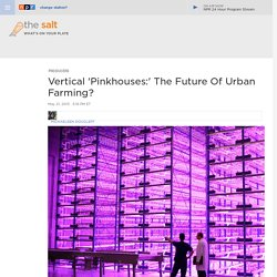 Vertical 'Pinkhouses:' The Future Of Urban Farming? : The Salt