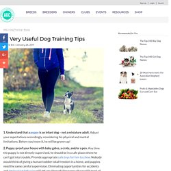 12 Very Helpful Dog Training Tips for Everyone