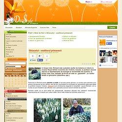 Ghiocelul - vestitorul primaverii - Strat de flori