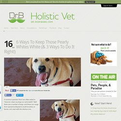 Dr. Ihor Basko - Worldwide Holistic Veterinary Care, Acupuncture, Diet Therapy
