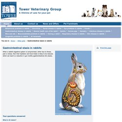 Factsheet: Gastrointestinal stasis in rabbits
