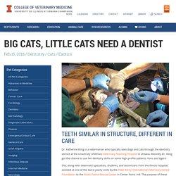 Dental Care for Big Cats vs. Little Cats - Veterinary Medicine at Illinois