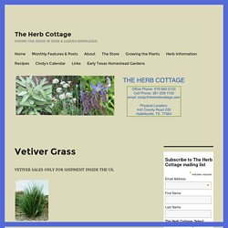 Vetiver Grass – The Herb Cottage