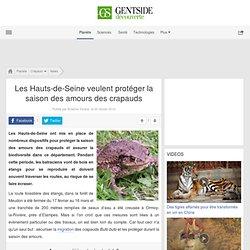 Les Hauts-de-Seine veulent protéger la saison des amours des crapauds