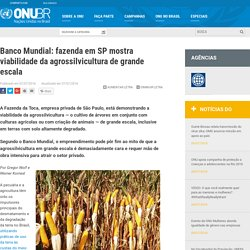 Banco Mundial: fazenda em SP mostra viabilidade da agrossilvicultura de grande escala