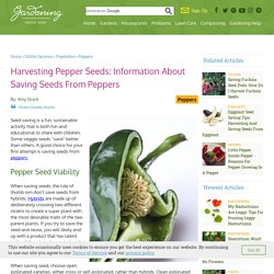 Pepper Seed Viability And Storage - How To Harvest Pepper Seeds