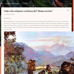 """en busca del """"Homo erectus"""""""