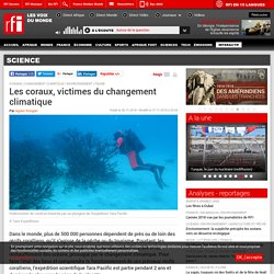 Les coraux, victimes du changement climatique - Science