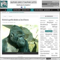 Victoria la gorille décède au Zoo d'Anvers