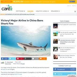 Victory! Major Airline Bans Shark Fins