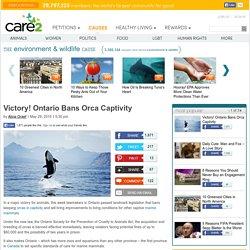 Victory! Ontario Bans Orca Captivity