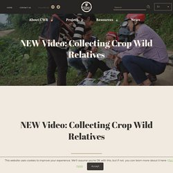 CWR » NEW Video: Collecting Crop Wild Relatives