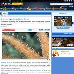Vidéo > L'étrange digestion de l'étoile de mer