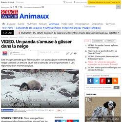 VIDEO. Un panda s'amuse à glisser dans la neige