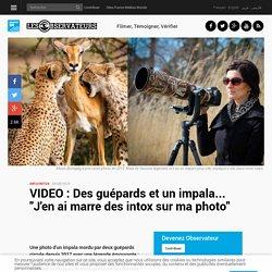 """VIDEO : Des guépards et un impala... """"J'en ai marre des intox sur ma photo"""""""