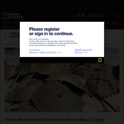"Video: Horseshoe Crabs Mate in Annual Beach ""Orgy"""
