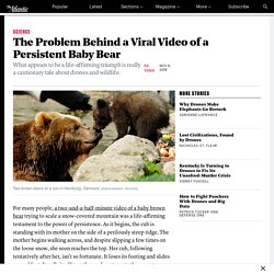 That Cute Baby-Bear Video Reveals a Problem With Drones