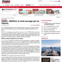 VIDÉO - WildCat, le chat sauvage qui en impose