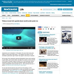 Videos reveal rich upside-down world under polar ice - life - 23 January 2015