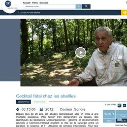 Vidéothèque CNRS : Cocktail fatal chez les abeilles