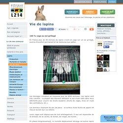 Vie de lapins