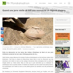 Quand une jarre vieille de 800 ans ressuscite un légume disparu