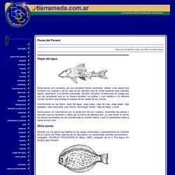 Viejas del agua y otros peces del Paraná