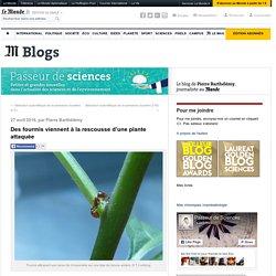 Des fourmis viennent à la rescousse d'une plante attaquée