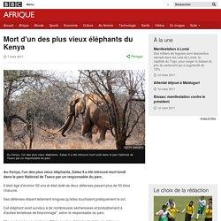 Mort d'un des plus vieux éléphants du Kenya - BBC Afrique