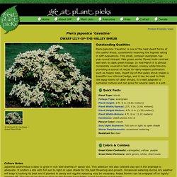 Great Plant Picks