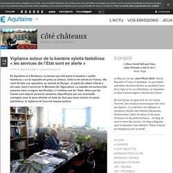 FRANCE 3 AQUITAINE 14/04/15 Vigilance autour de la bactérie xylella fastidiosa: « les services de l'Etat sont en alerte »