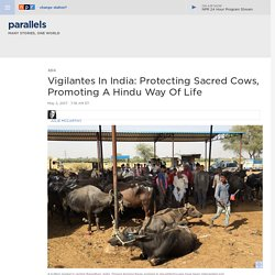 Vigilantes In India: Protecting Sacred Cows, Promoting A Hindu Way Of Life : Parallels