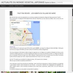 ACTUALITE DU MONDE VEGETAL JAPONAIS: FAUT PAS REVER... LES KABATA DU VILLAGE DE HARIE