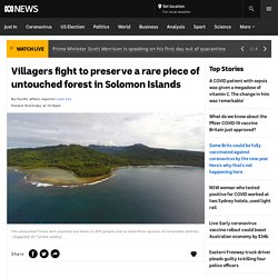 Villagers fight to preserve a rare piece of untouched forest in Solomon Islands - ABC News
