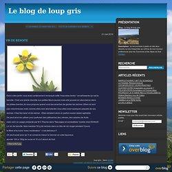 VIN DE BENOITE - Le blog de loup gris