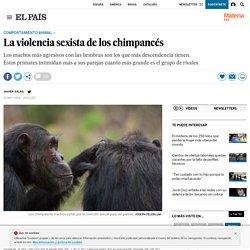 La violencia sexista de los chimpancés