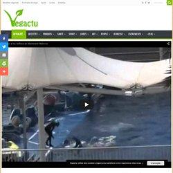 Des dresseurs violentent des dauphins à Marineland (vidéo) – Vegactu