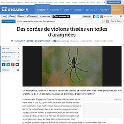 Sciences : Des cordes de violons tissées en toiles d'araignées