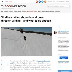 Viral bear video shows how drones threaten wildlife – and what to do about it