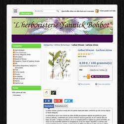 "Laitue Vireuse - Lactusa virosa ""L'Herboristerie Yannick Bohbot"""