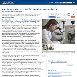 MONTANA STATE UNIVERSITY 04/05/15 MSU virologist receives grants for research on honeybee health