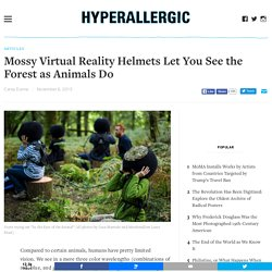 Mossy Virtual Reality Helmets Let You See the Forest as Animals Do