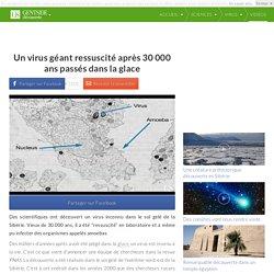 Un virus géant ressuscité après 30 000 ans passés dans la glace