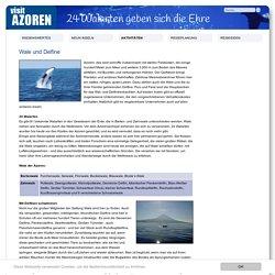Visit Azoren: Wale und Delfine