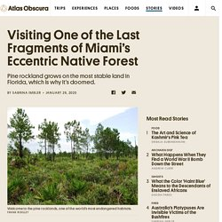 Visiting One of the Last Fragments of Miami's Eccentric Native Forest